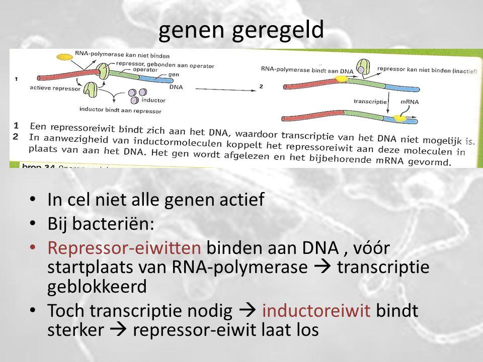 genen geregeld In cel niet alle genen actief Bij bacteriën: Repressor-eiwitten binden aan DNA, vóór startplaats van RNA-polymerase  transcriptie gebl