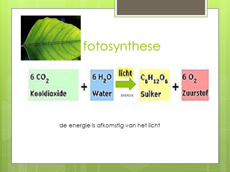 fotosynthese energ ie de energie is afkomstig van het licht ENERGIE