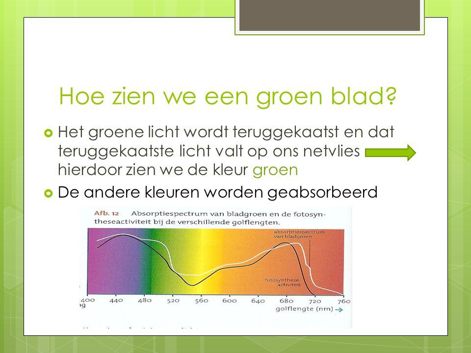 Hoe zien we een groen blad?  Het groene licht wordt teruggekaatst en dat teruggekaatste licht valt op ons netvlies hierdoor zien we de kleur groen 