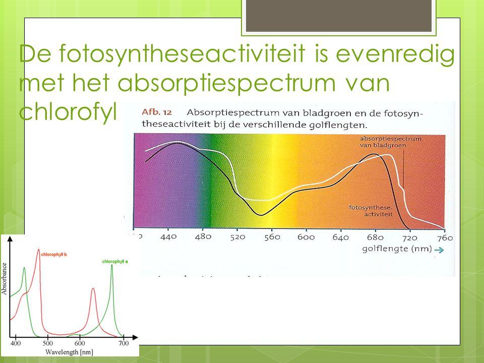 De fotosyntheseactiviteit is evenredig met het absorptiespectrum van chlorofyl