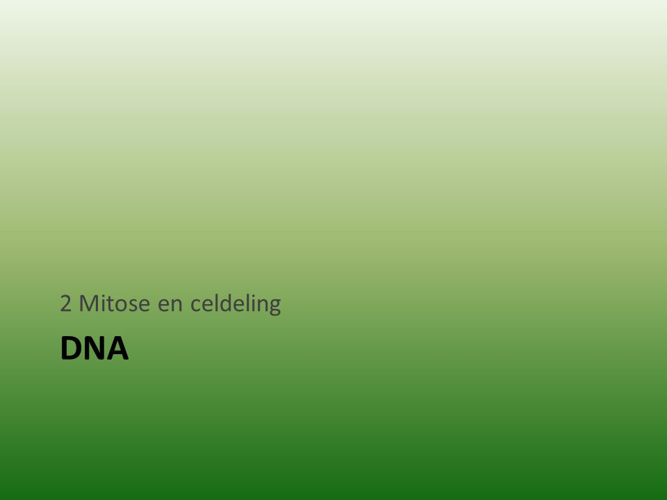DNA 2 Mitose en celdeling