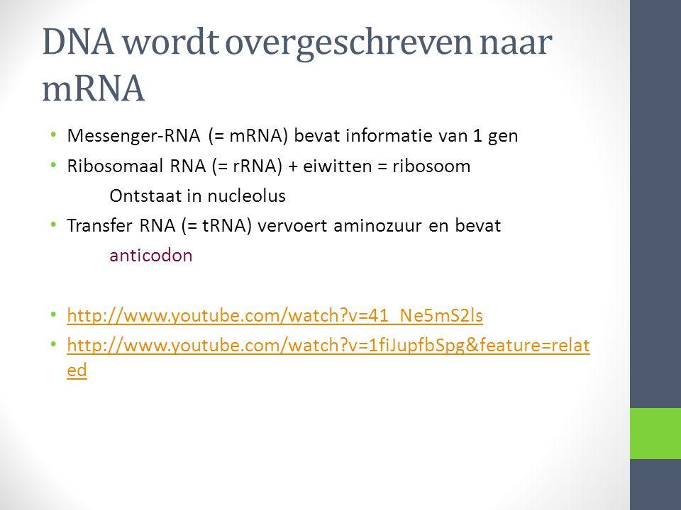 DNA wordt overgeschreven naar mRNA Messenger-RNA (= mRNA) bevat informatie van 1 gen Ribosomaal RNA (= rRNA) + eiwitten = ribosoom Ontstaat in nucleol