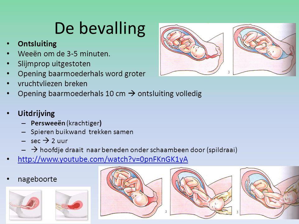 De bevalling Ontsluiting Weeën om de 3-5 minuten. Slijmprop uitgestoten Opening baarmoederhals word groter vruchtvliezen breken Opening baarmoederhals