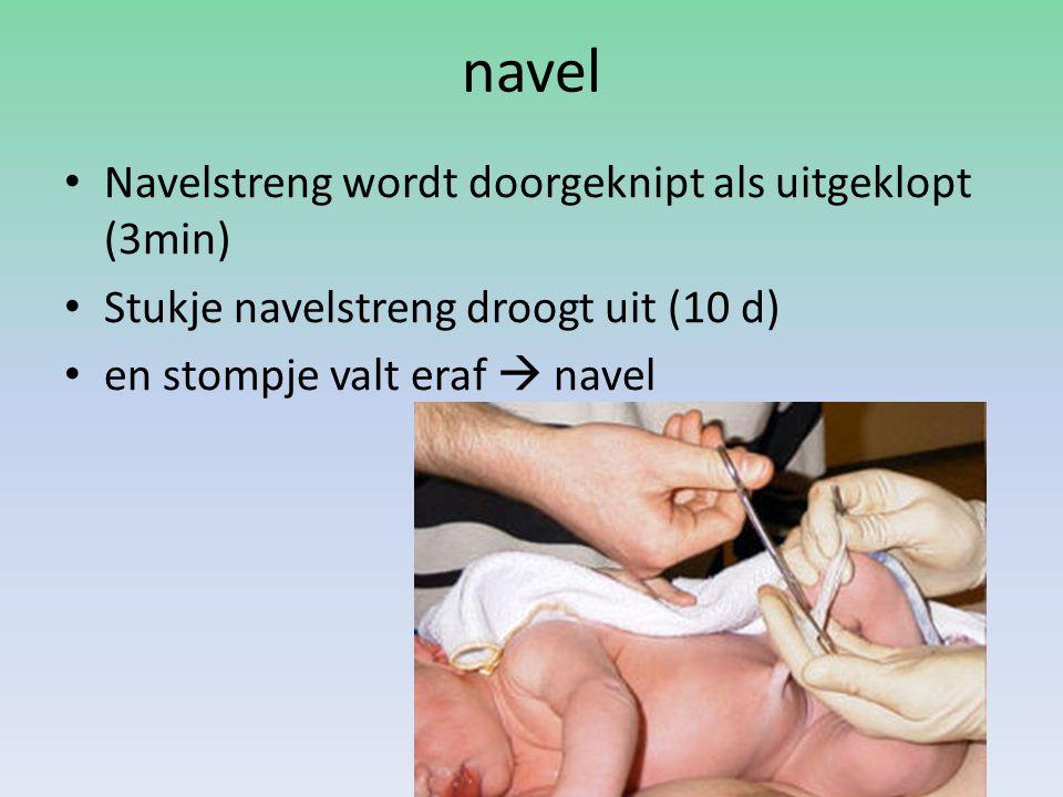 navel Navelstreng wordt doorgeknipt als uitgeklopt (3min) Stukje navelstreng droogt uit (10 d) en stompje valt eraf  navel