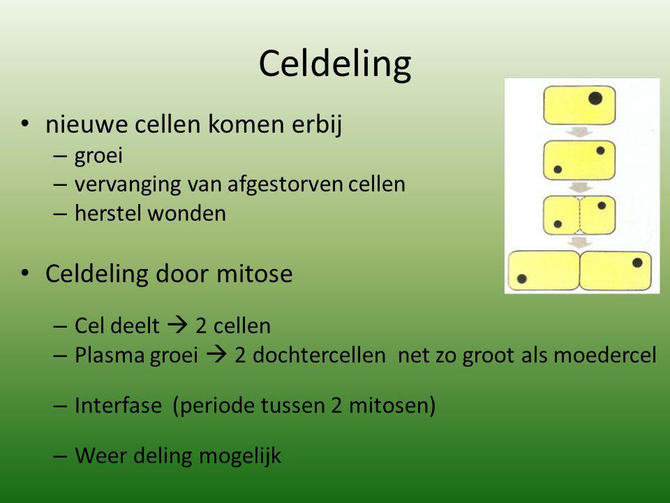 Celdeling nieuwe cellen komen erbij – groei – vervanging van afgestorven cellen – herstel wonden Celdeling door mitose – Cel deelt  2 cellen – Plasma