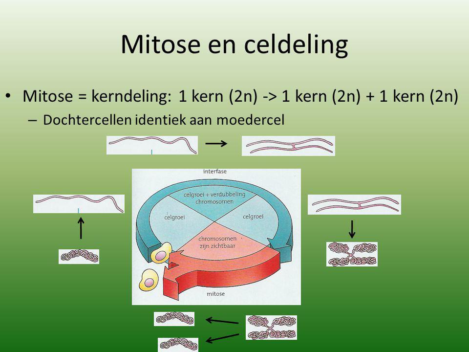 Mitose en celdeling Mitose = kerndeling: 1 kern (2n) -> 1 kern (2n) + 1 kern (2n) – Dochtercellen identiek aan moedercel