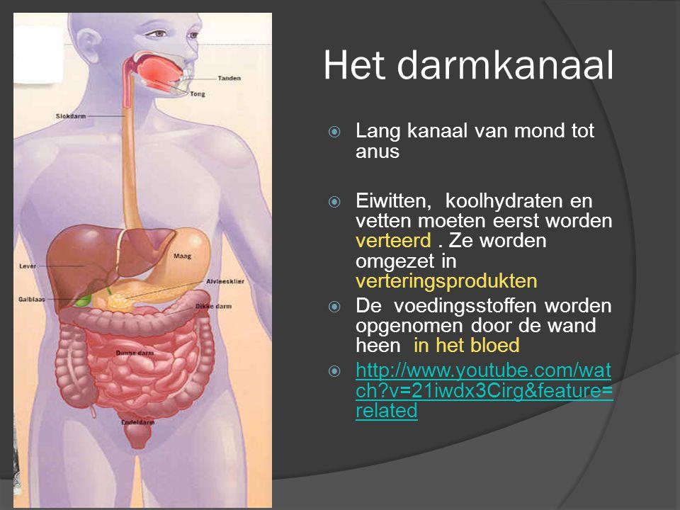 Het darmkanaal  Lang kanaal van mond tot anus  Eiwitten, koolhydraten en vetten moeten eerst worden verteerd. Ze worden omgezet in verteringsprodukt