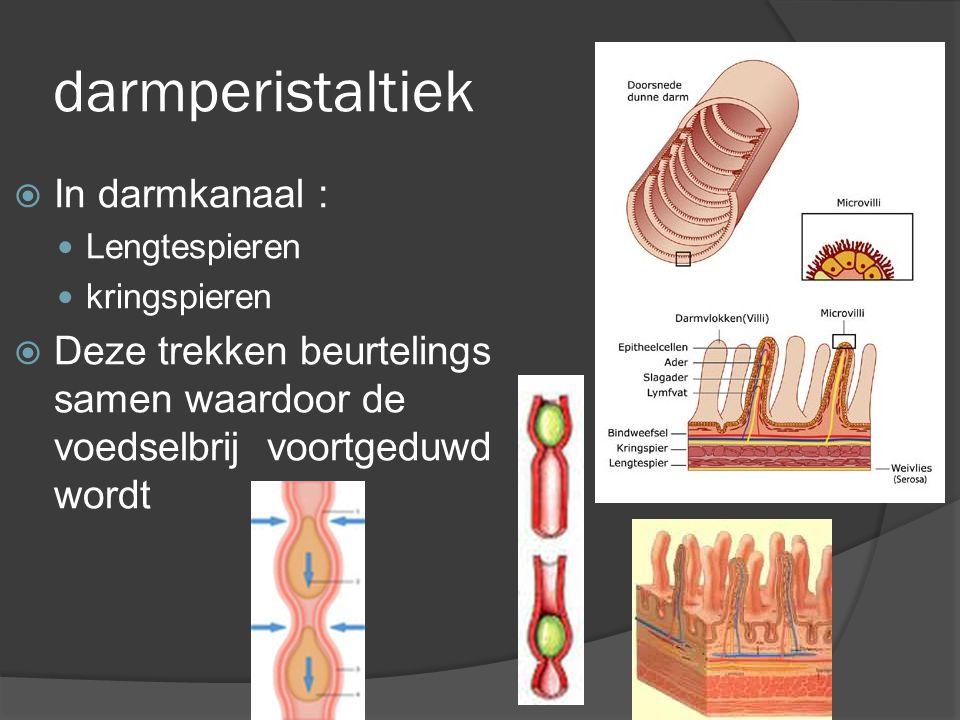 darmperistaltiek  In darmkanaal : Lengtespieren kringspieren  Deze trekken beurtelings samen waardoor de voedselbrij voortgeduwd wordt