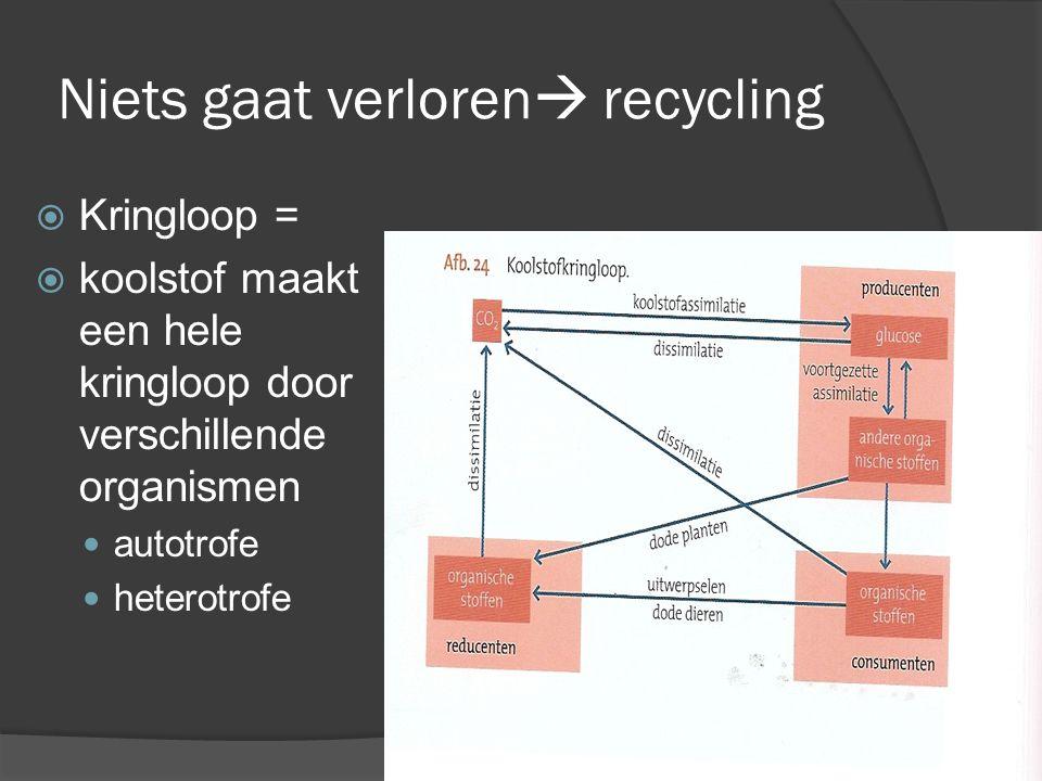 Niets gaat verloren  recycling  Kringloop =  koolstof maakt een hele kringloop door verschillende organismen autotrofe heterotrofe