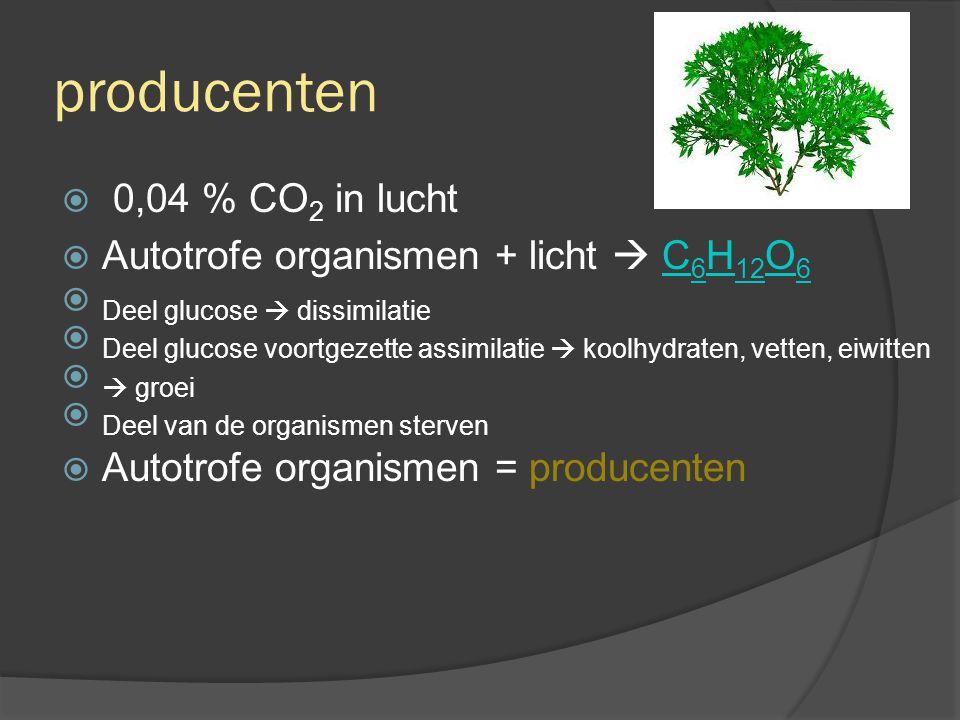 producenten  0,04 % CO 2 in lucht  Autotrofe organismen + licht  C 6 H 12 O 6C 6 H 12 O 6  Deel glucose  dissimilatie  Deel glucose voortgezette