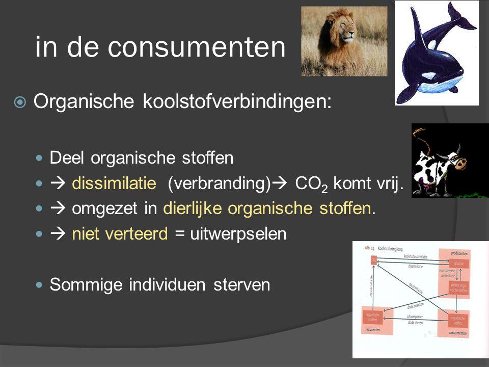 reducenten  Organische stoffen in dode organismen ( autotroof/ heterotroof) en uitwerpselen worden door schimmels en bacteriën omgezet bij dissimilatie  CO 2 komt vrij beschikbaar in lucht.= reducenten