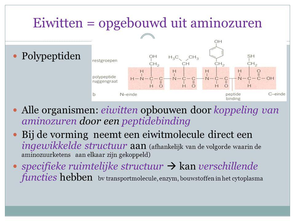 Eiwitten = opgebouwd uit aminozuren Polypeptiden Alle organismen: eiwitten opbouwen door koppeling van aminozuren door een peptidebinding Bij de vormi