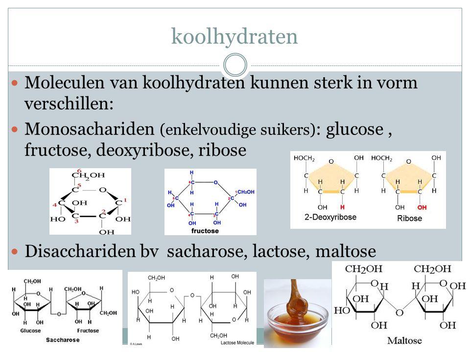 Meervoudige koolhydraten Polysachariden, lange ketens slecht oplosbaar in water Zetmeel: reservestof in zetmeelkorrels Cellulose Celwanden van planten in dieren : glycogeen Opgeslagen in lever en spieren