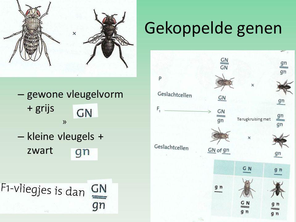 Gekoppelde genen – gewone vleugelvorm + grijs » – kleine vleugels + zwart Terugkruising met