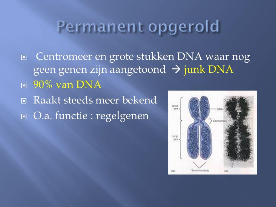  Centromeer en grote stukken DNA waar nog geen genen zijn aangetoond  junk DNA  90% van DNA  Raakt steeds meer bekend  O.a.