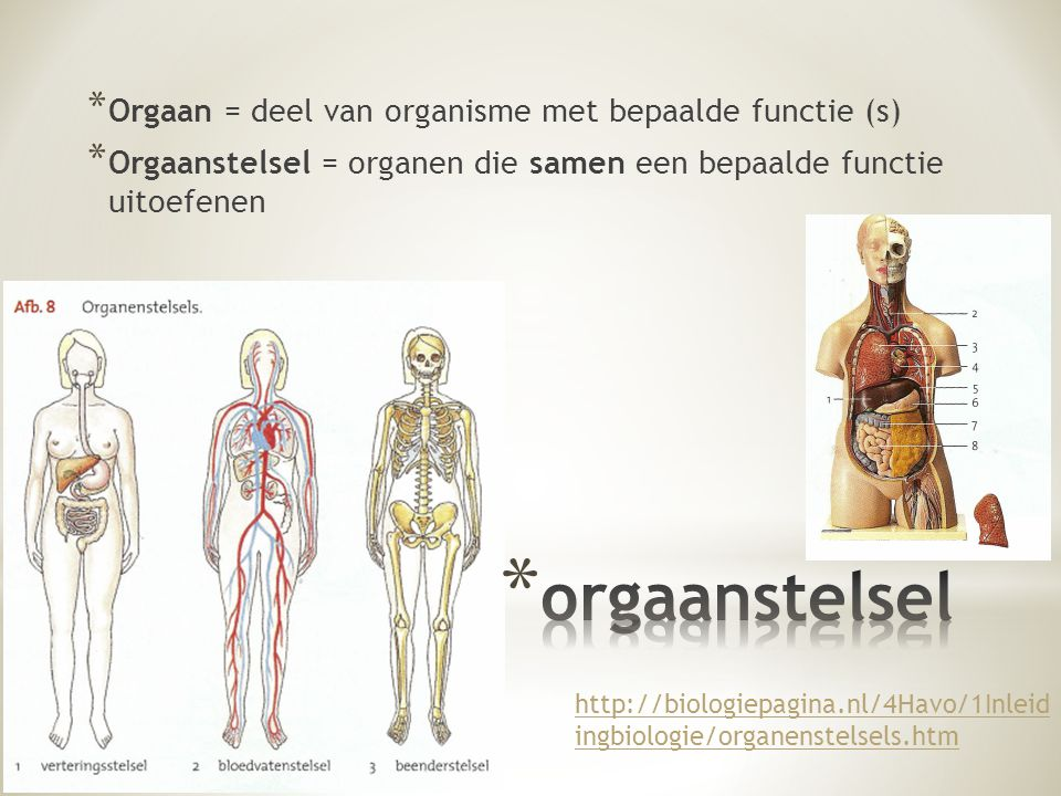 * Orgaan = deel van organisme met bepaalde functie (s) * Orgaanstelsel = organen die samen een bepaalde functie uitoefenen http://biologiepagina.nl/4Havo/1Inleid ingbiologie/organenstelsels.htm