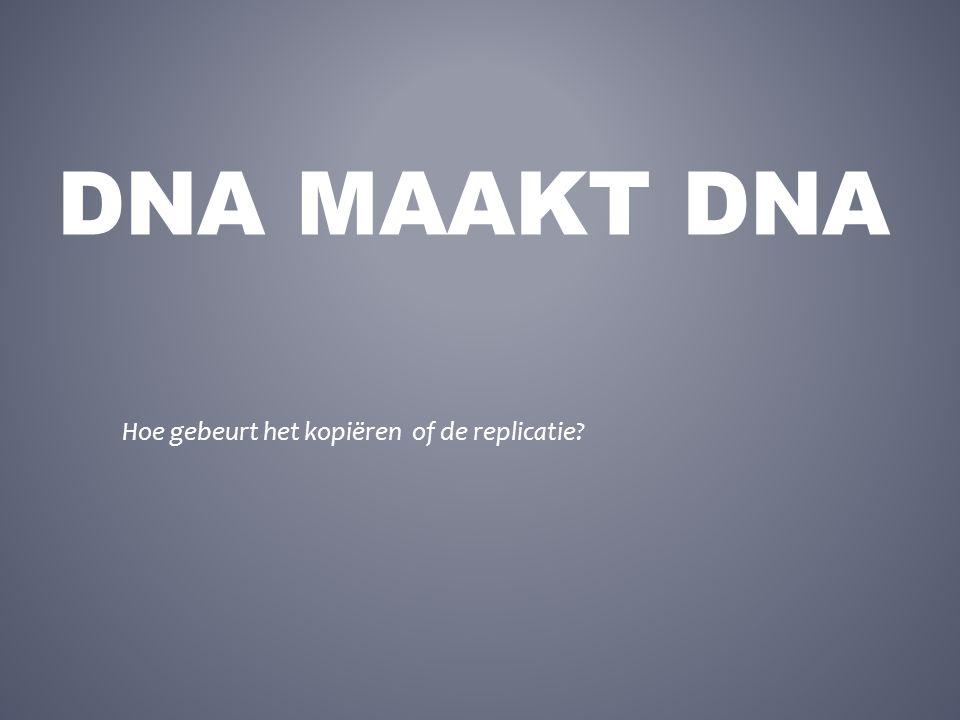 DNA MAAKT DNA Hoe gebeurt het kopiëren of de replicatie?