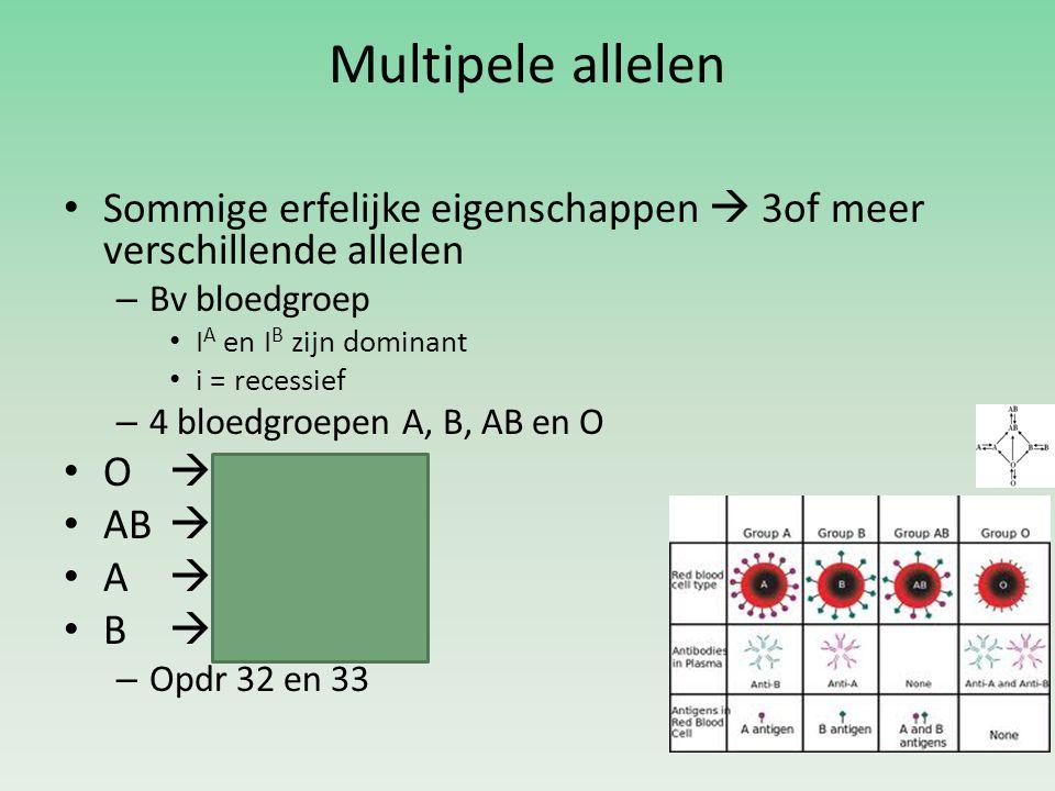 Multipele allelen Sommige erfelijke eigenschappen  3of meer verschillende allelen – Bv bloedgroep I A en I B zijn dominant i = recessief – 4 bloedgroepen A, B, AB en O O  ii AB  I A I B A  I A I A en I A i B  I B I B en I B i – Opdr 32 en 33