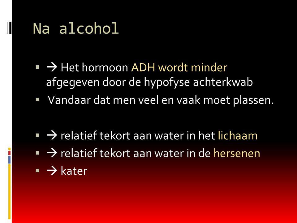 Na alcohol   Het hormoon ADH wordt minder afgegeven door de hypofyse achterkwab  Vandaar dat men veel en vaak moet plassen.   relatief tekort aan