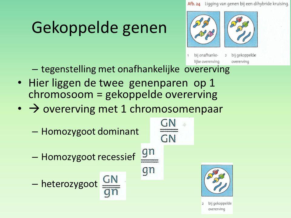 Gekoppelde genen – tegenstelling met onafhankelijke overerving Hier liggen de twee genenparen op 1 chromosoom = gekoppelde overerving  overerving met
