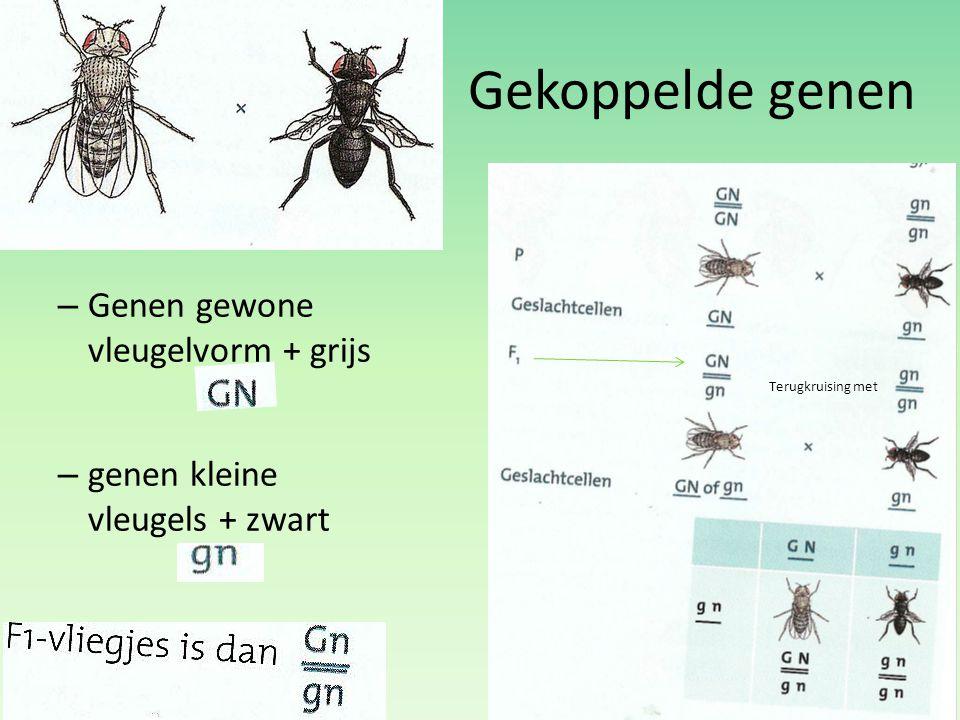 Gekoppelde genen – Genen gewone vleugelvorm + grijs » – genen kleine vleugels + zwart Terugkruising met