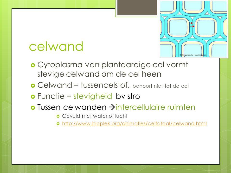 celwand  Cytoplasma van plantaardige cel vormt stevige celwand om de cel heen  Celwand = tussencelstof, behoort niet tot de cel  Functie = stevighe