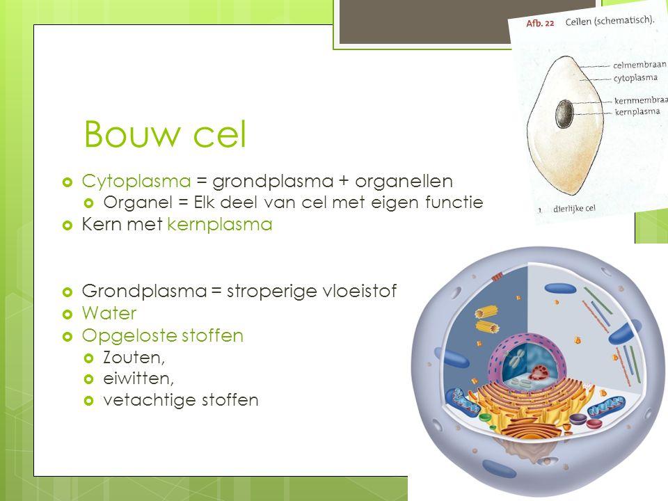  Cytoplasma = grondplasma + organellen  Organel = Elk deel van cel met eigen functie  Kern met kernplasma  Grondplasma = stroperige vloeistof  Wa
