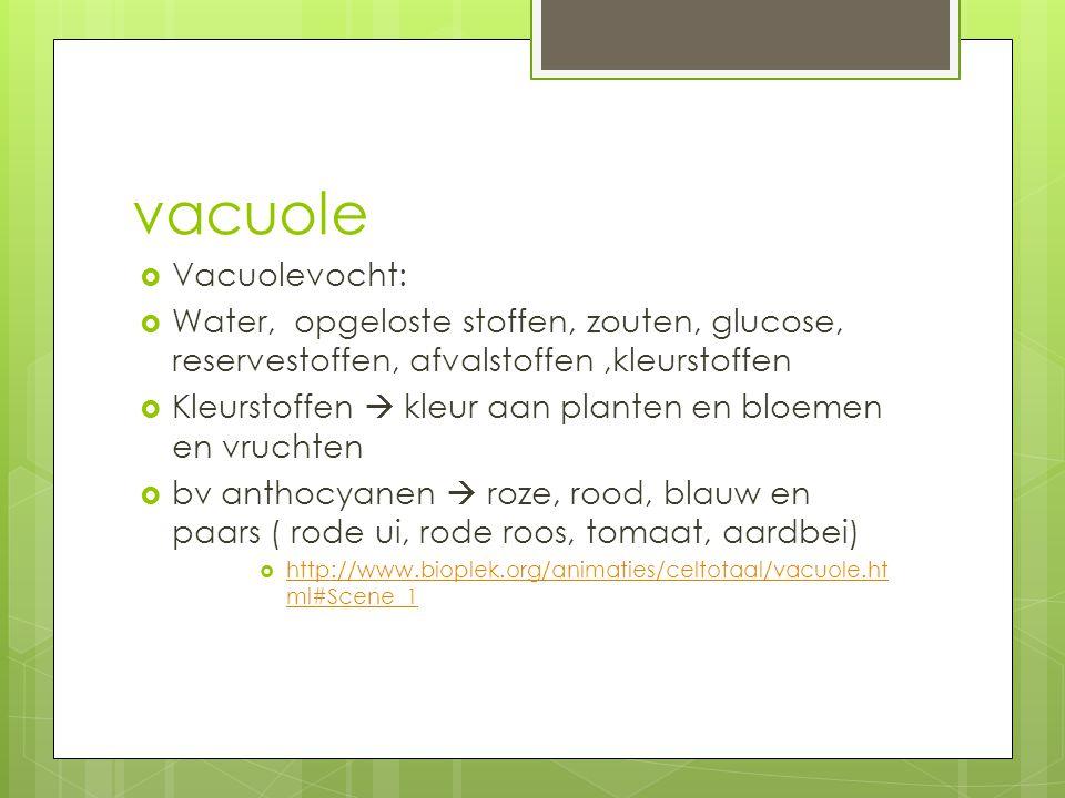 vacuole  Vacuolevocht:  Water, opgeloste stoffen, zouten, glucose, reservestoffen, afvalstoffen,kleurstoffen  Kleurstoffen  kleur aan planten en b