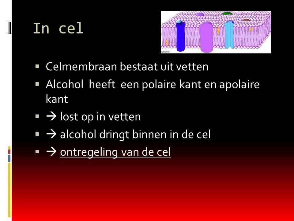 In cel  Celmembraan bestaat uit vetten  Alcohol heeft een polaire kant en apolaire kant   lost op in vetten   alcohol dringt binnen in de cel   ontregeling van de cel