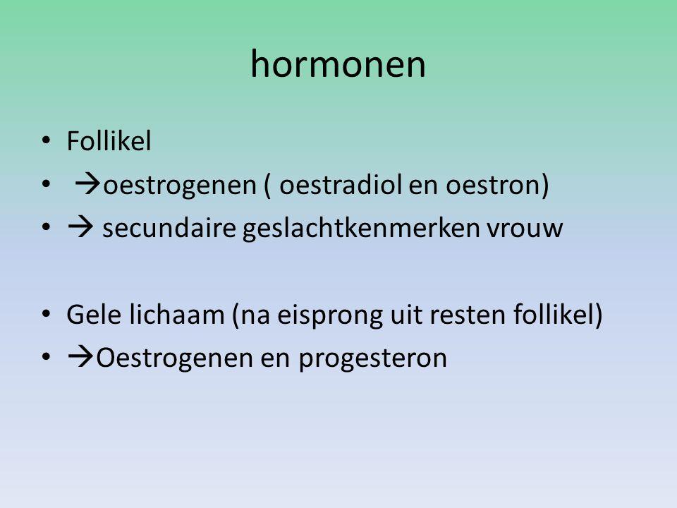 hormonen Follikel  oestrogenen ( oestradiol en oestron)  secundaire geslachtkenmerken vrouw Gele lichaam (na eisprong uit resten follikel)  Oestrog