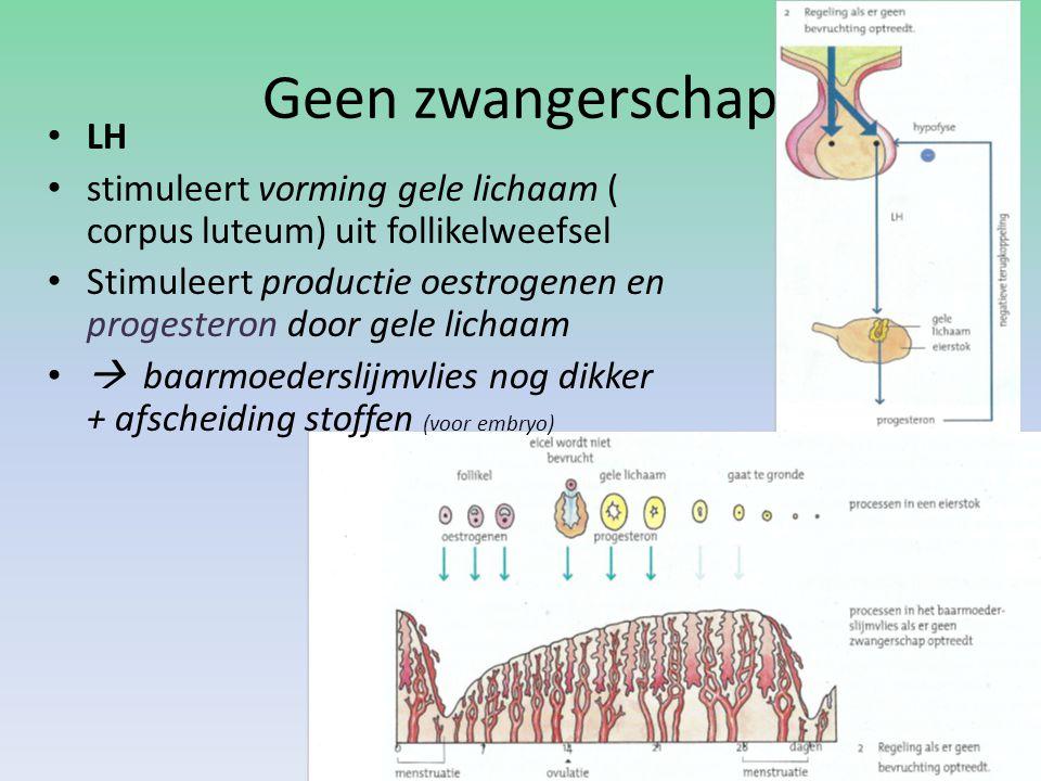 Geen zwangerschap LH stimuleert vorming gele lichaam ( corpus luteum) uit follikelweefsel Stimuleert productie oestrogenen en progesteron door gele lichaam  baarmoederslijmvlies nog dikker + afscheiding stoffen (voor embryo)
