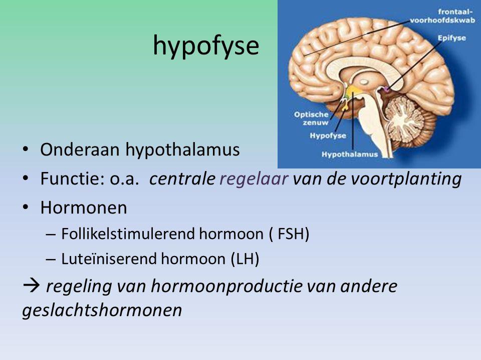 hypofyse Onderaan hypothalamus Functie: o.a. centrale regelaar van de voortplanting Hormonen – Follikelstimulerend hormoon ( FSH) – Luteïniserend horm