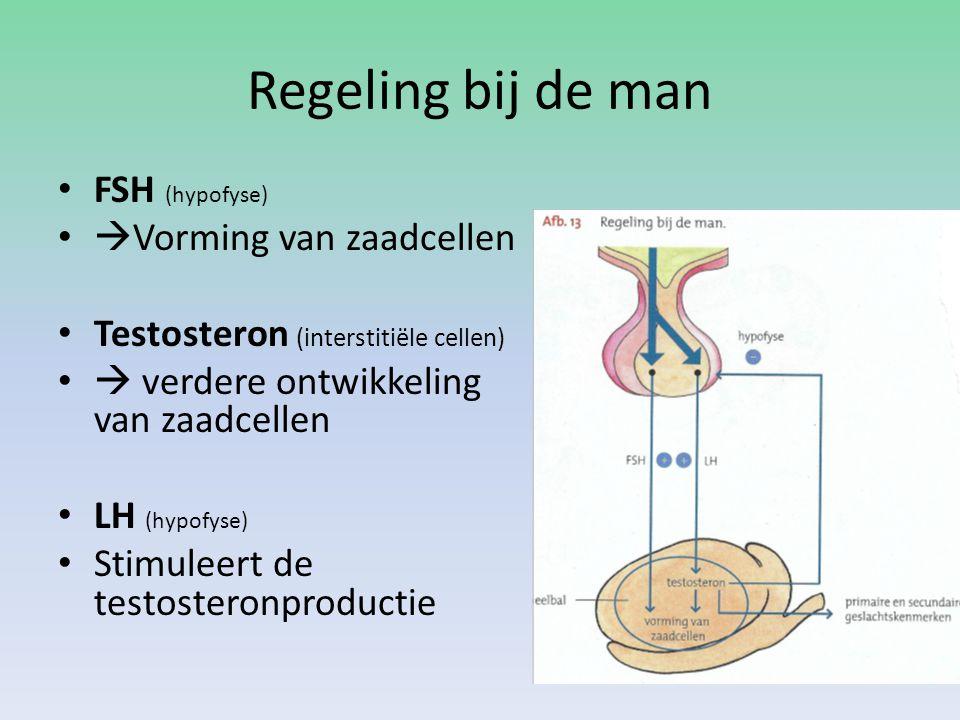 Regeling bij de man FSH (hypofyse)  Vorming van zaadcellen Testosteron (interstitiële cellen)  verdere ontwikkeling van zaadcellen LH (hypofyse) Stimuleert de testosteronproductie