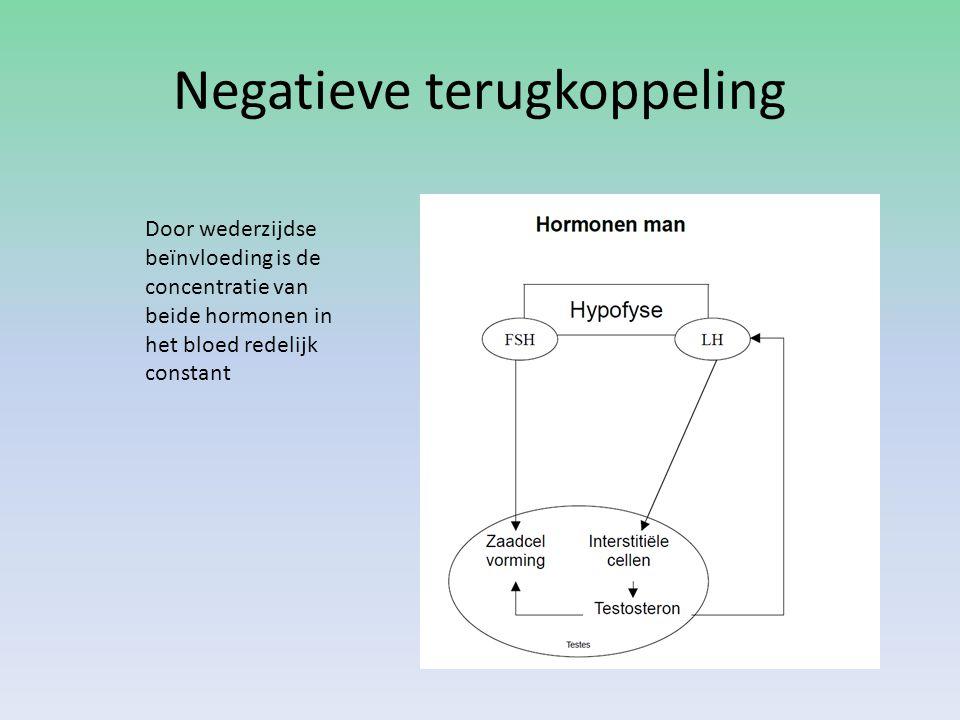 Negatieve terugkoppeling Door wederzijdse beïnvloeding is de concentratie van beide hormonen in het bloed redelijk constant