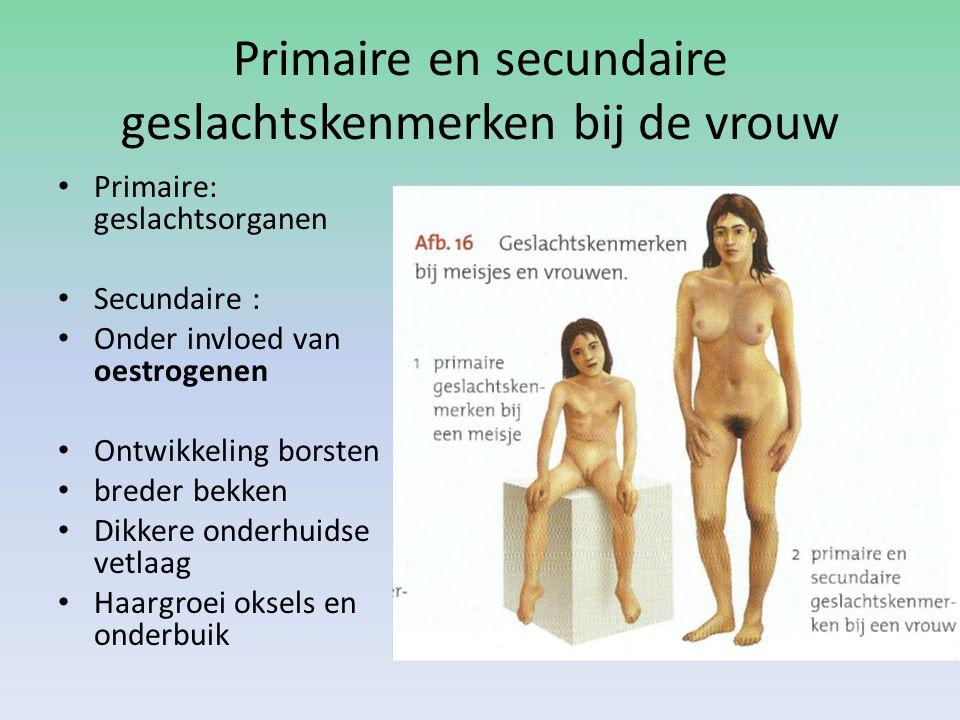 Primaire en secundaire geslachtskenmerken bij de vrouw Primaire: geslachtsorganen Secundaire : Onder invloed van oestrogenen Ontwikkeling borsten bred