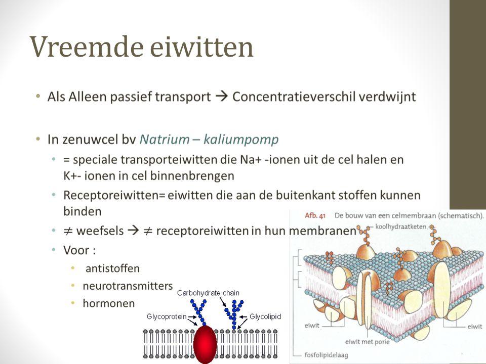 DE CEL 1.Nucleus (celkern) 2.ribosomen 3.blaasje 4.Ruw endoplasmatisch reticulum 5.Golgi-apparaat 6.Microtubuli 7.Glad endoplasmatisch reticulum 8.Mitochondriën 9.Peroxisoom 10.Nucleolus (celkernlichaampje) 11.Cytoplasma 12.Lysosoom 13.Centriolen