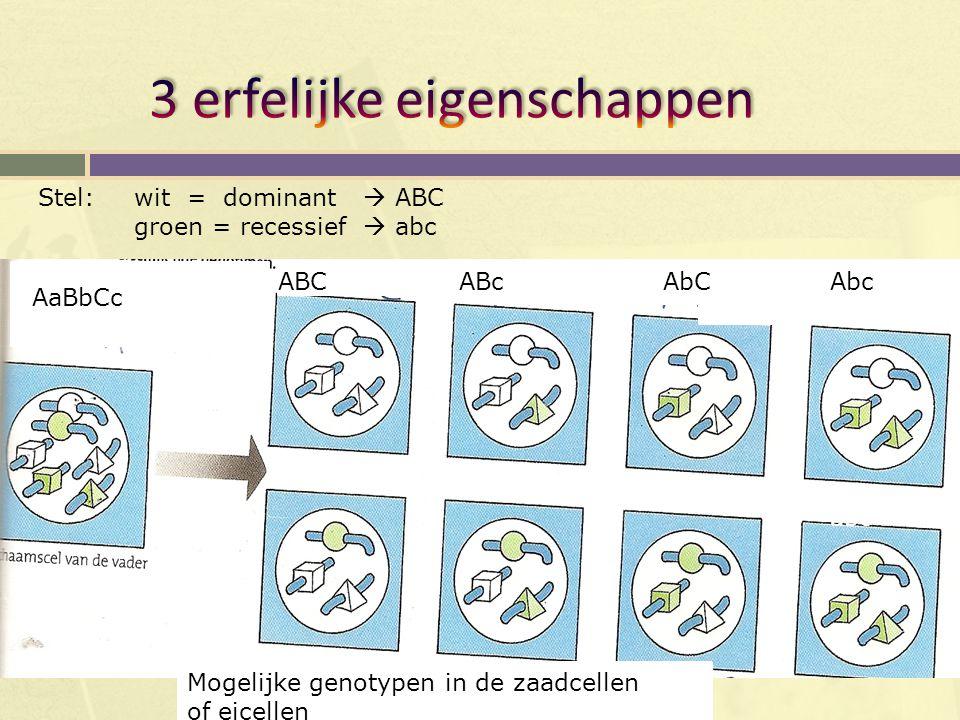 AaBbCc ABCABcAbCAbc Mogelijke genotypen in de zaadcellen of eicellen aBC aBc Stel: wit = dominant  ABC groen = recessief  abc abC abc