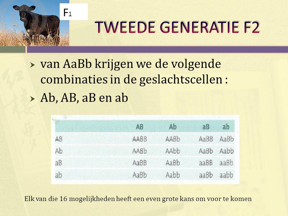  van AaBb krijgen we de volgende combinaties in de geslachtscellen :  Ab, AB, aB en ab F1F1 Elk van die 16 mogelijkheden heeft een even grote kans o
