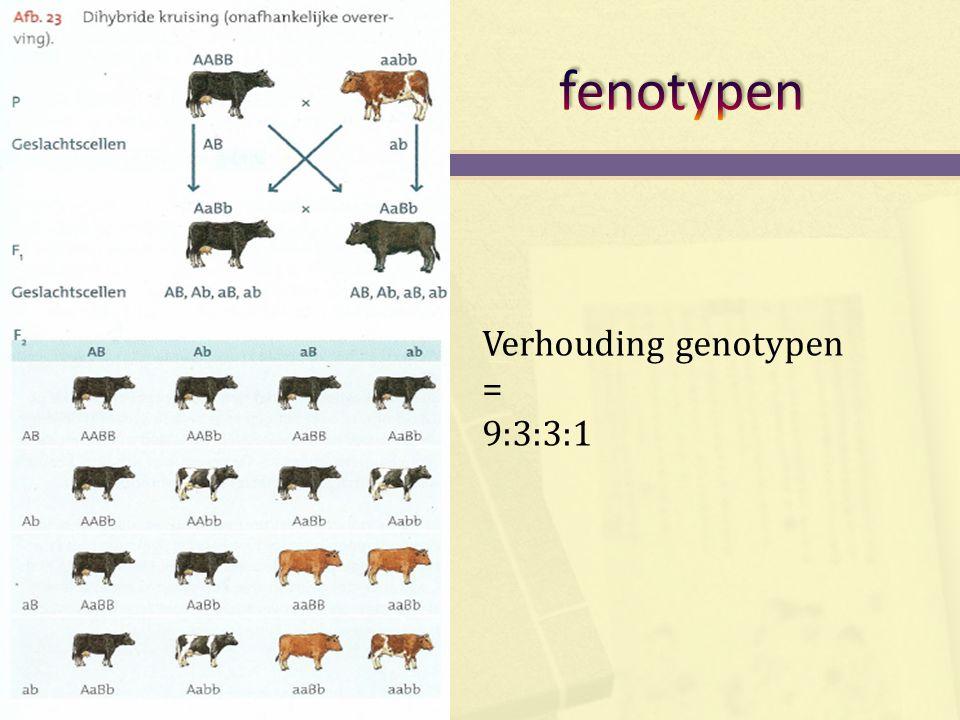 Verhouding genotypen = 9:3:3:1