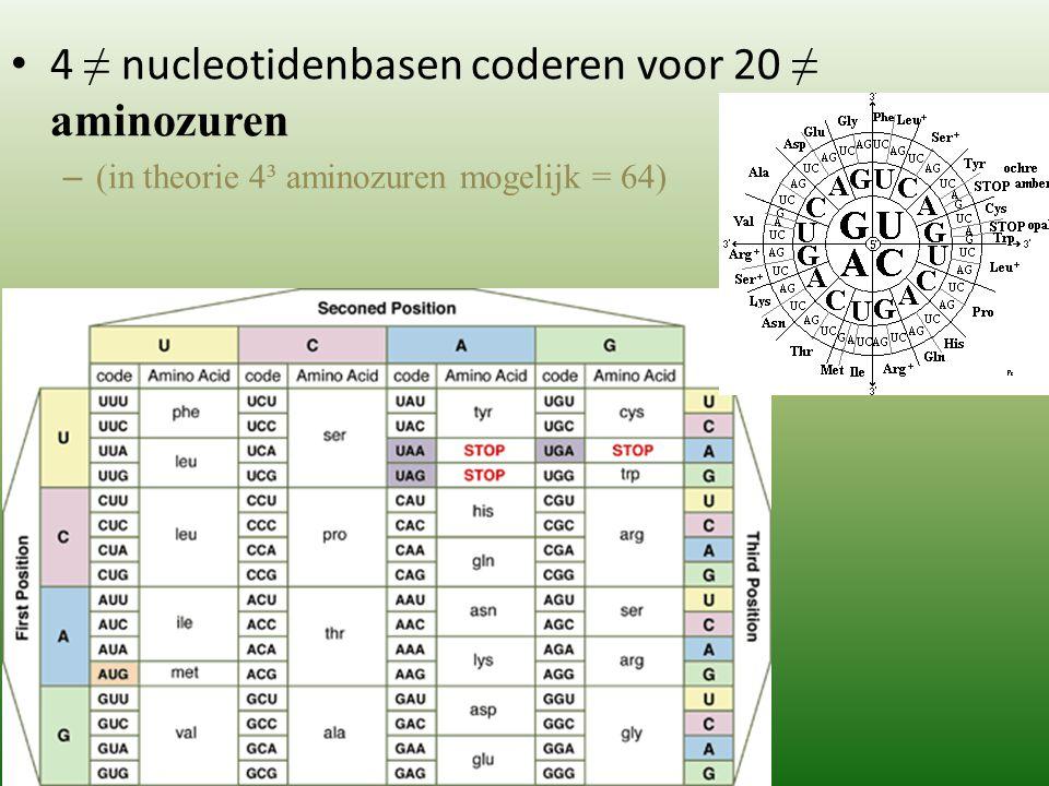 4 ≠ nucleotidenbasen coderen voor 20 ≠ aminozuren – (in theorie 4³ aminozuren mogelijk = 64)