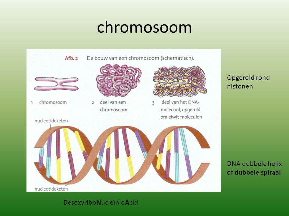 chromosoom DNA dubbele helix of dubbele spiraal DesoxyriboNucleïnic Acid Opgerold rond histonen