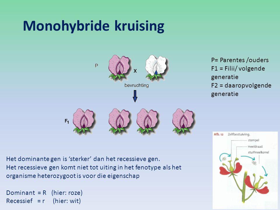Monohybride kruising Het dominante gen is 'sterker' dan het recessieve gen. Het recessieve gen komt niet tot uiting in het fenotype als het organisme