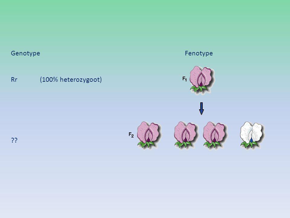 GenotypeFenotype Rr (100% heterozygoot) ??