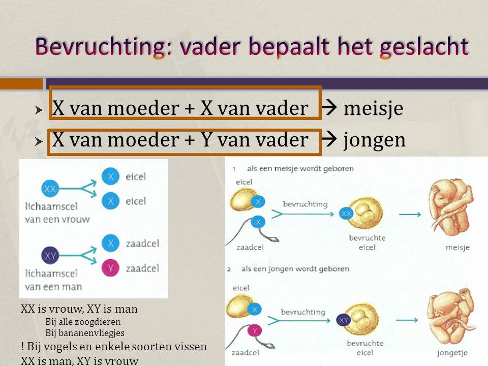  X-chromosoom bevat meer genen dan het Y-chromosoom  Y-chromosoom bevat zeer weinig genen