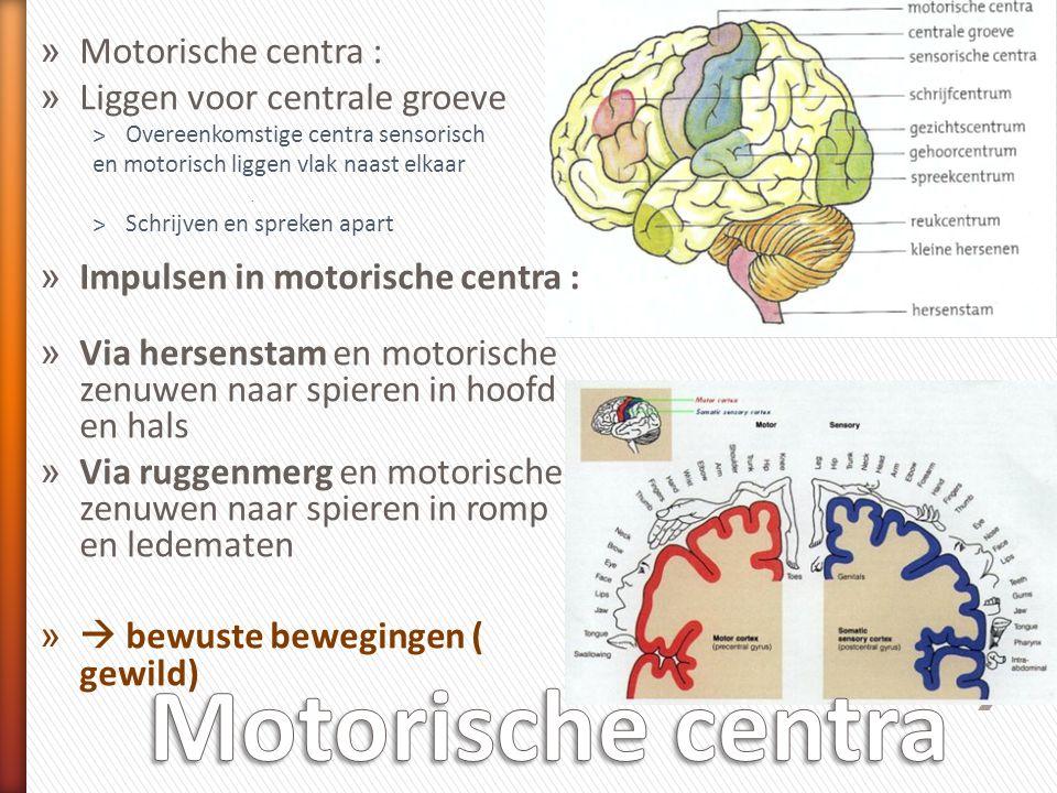 » Motorische centra : » Liggen voor centrale groeve ˃Overeenkomstige centra sensorisch en motorisch liggen vlak naast elkaar. ˃Schrijven en spreken ap
