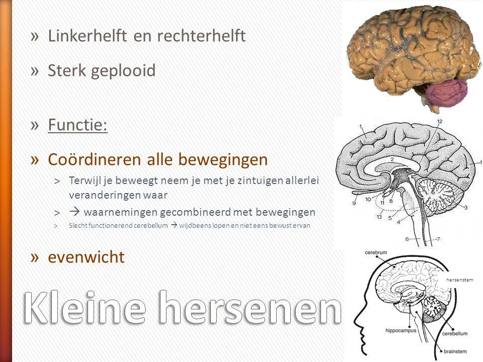 » Beschermd door : » schedel » 3 hersenvliezen » In hersenen hersenholten » Gevuld met hersenvocht 1.