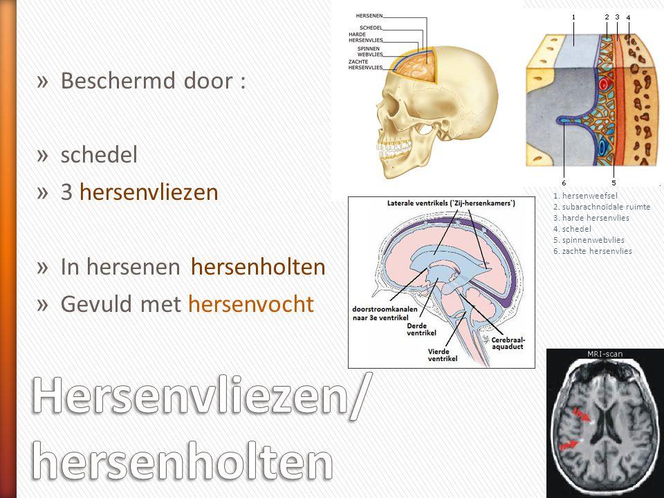 » Beschermd door : » schedel » 3 hersenvliezen » In hersenen hersenholten » Gevuld met hersenvocht 1. hersenweefsel 2. subarachnoïdale ruimte 3. harde