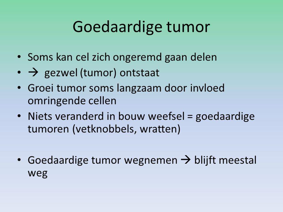 Goedaardige tumor Soms kan cel zich ongeremd gaan delen  gezwel (tumor) ontstaat Groei tumor soms langzaam door invloed omringende cellen Niets veran