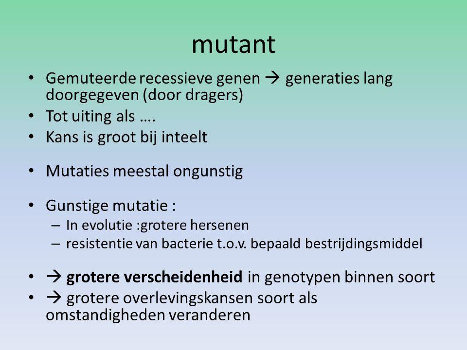 mutant Gemuteerde recessieve genen  generaties lang doorgegeven (door dragers) Tot uiting als …. Kans is groot bij inteelt Mutaties meestal ongunstig