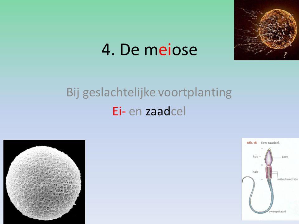 4. De meiose Bij geslachtelijke voortplanting Ei- en zaadcel